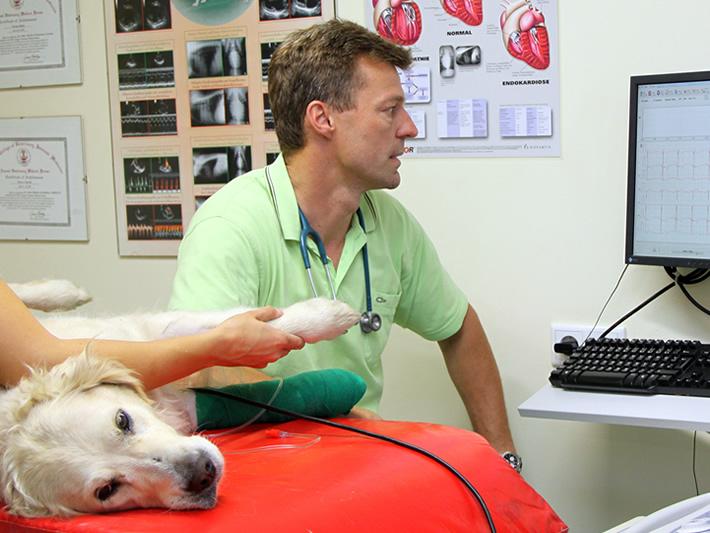 Kardiologie Untersuchung Hund Haustier - Dr. Andre Mischke - www.kleintierzentrum-harsefeld.de
