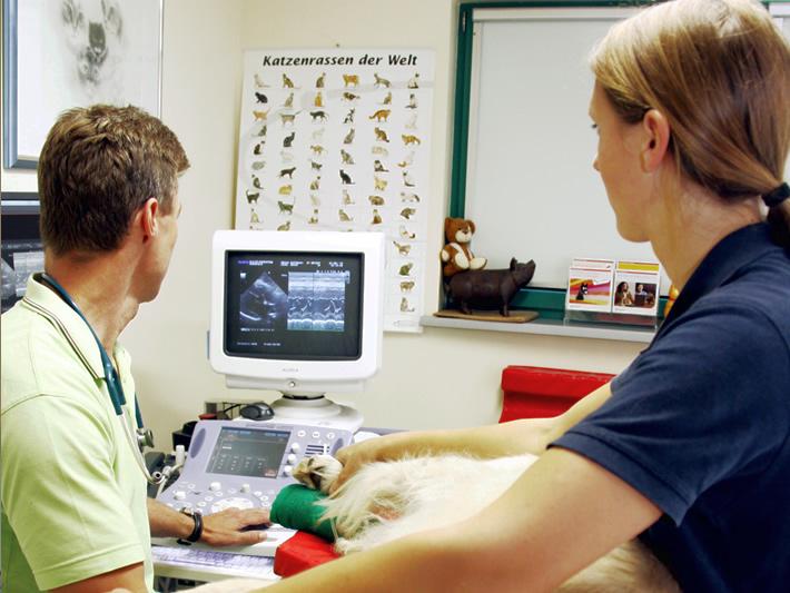 Ultraschall - Sonographie am Haustier im Kleintierzentrum in Harsefeld - Dr. Mischke und Dr. Wenzel