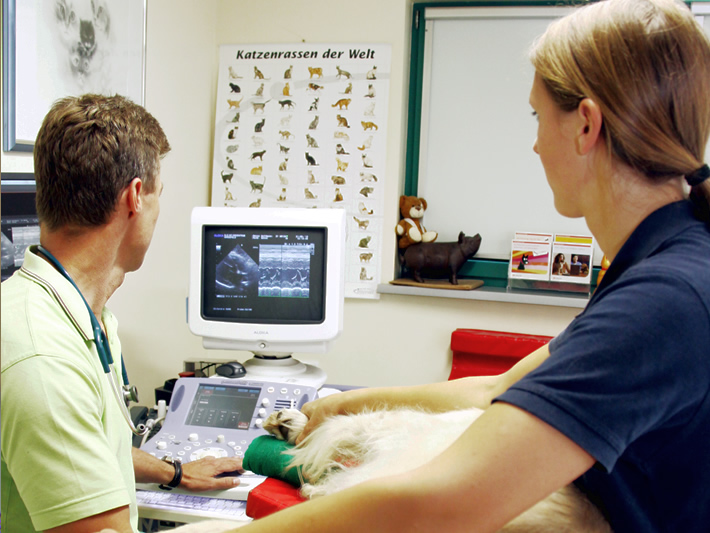 Ultraschall - Sonographie